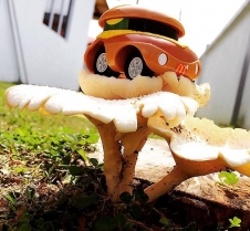 Mushroomsam